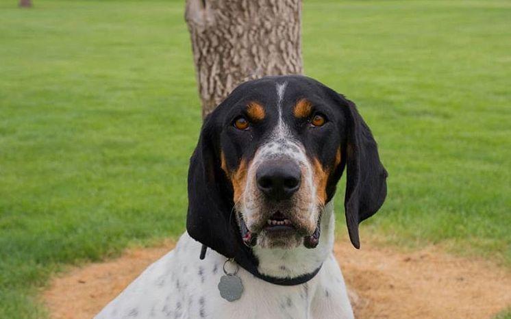 Dog at Utah Animal Adoption Center in Salt Lake City