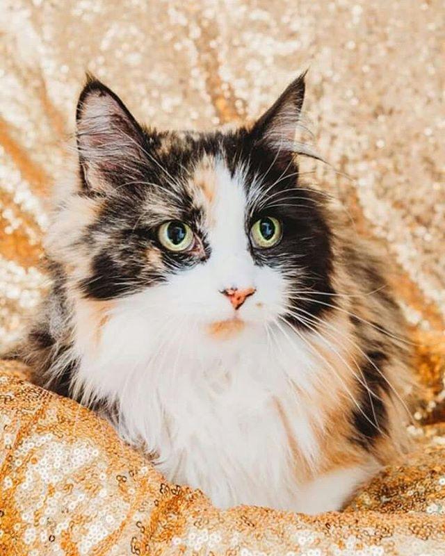 Cat from Utah Animal Adoption Center in Salt Lake City