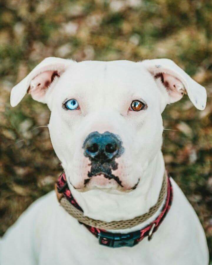 Adoptable dog from Utah Animal Adoption Center in Salt Lake City