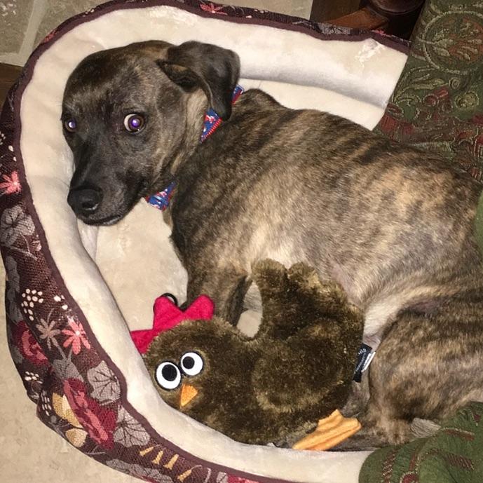 Brown dog from Utah Animal Adoption Center in Salt Lake City